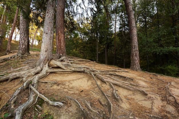 Spokojny krajobraz matki natury