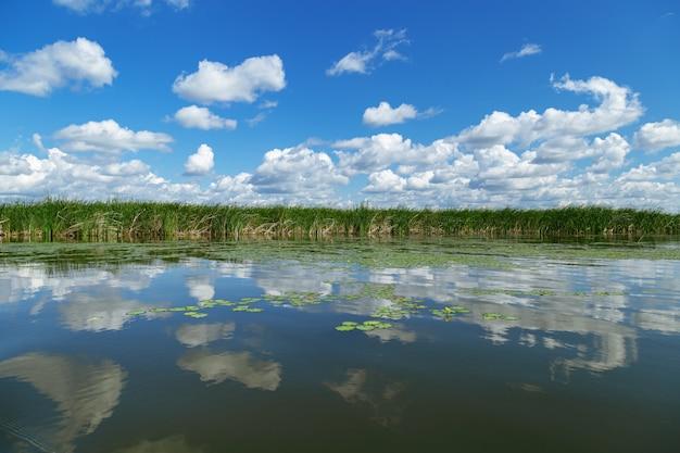 Spokojny krajobraz z zieloną trawą jeziora i błękitnym niebem z chmurami odbijającymi się w wodzie