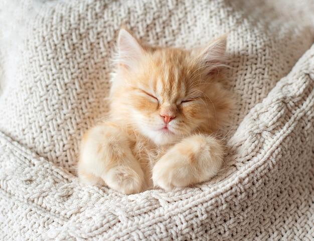 Spokojny rudy kot pręgowany kotek zwinięty w kłębek do spania