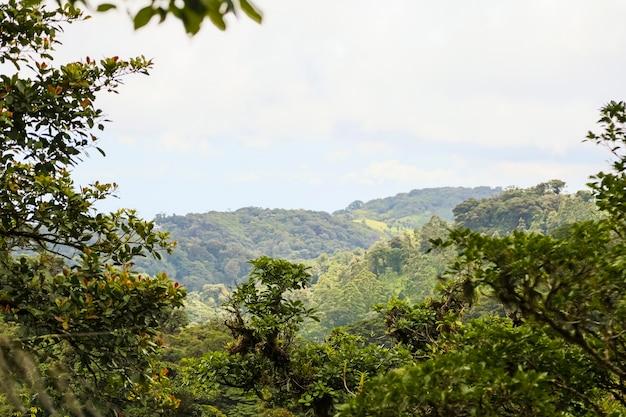 Spokojny tropikalny las deszczowy widok kostaryki