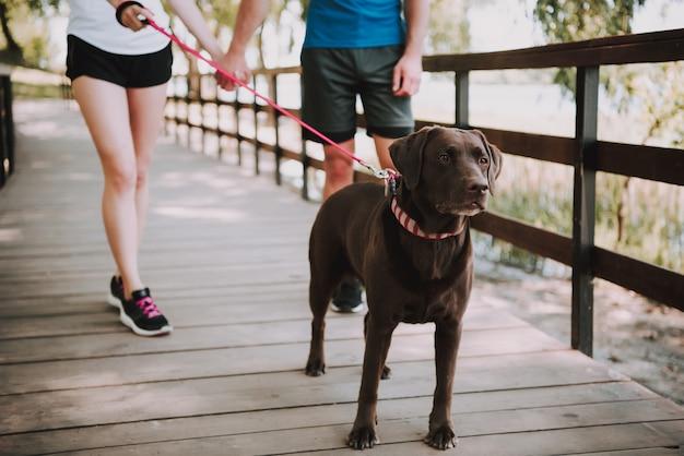 Sportowa para sportowców biegnie w green park. czekoladowy labrador retriever