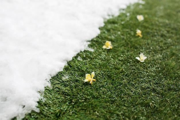 Spotkanie biały śnieg i zielona trawa z kwiatami z bliska - między zimą a wiosną tło koncepcji.