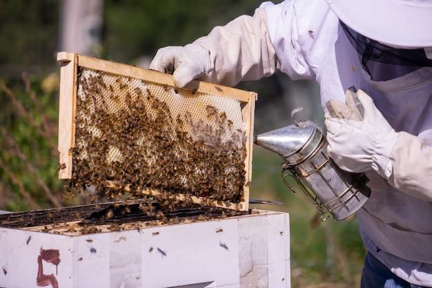 Sprawdzanie pszczół i używanie dymu