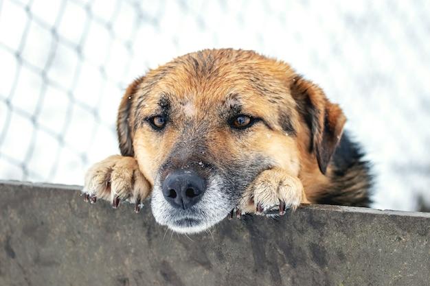 Sprytny pies wygląda zimą zza płotu