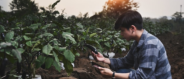Sprytny rolnik korzystający z tabletu sprawdzający rozwój bakłażana w gospodarstwie polowym.