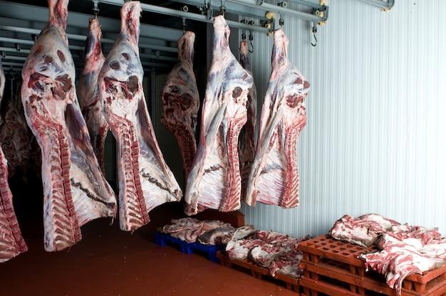 Sprzedam duże kawałki świeżego mięsa w chłodniach