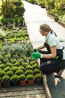 Sprzedawca na kwiatowym targu plenerowym. ręce kobiety dają garnek