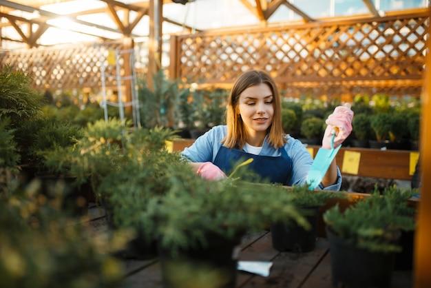 Sprzedawczyni z łopatą ogrodową opiekuje się roślinami w sklepie ogrodniczym. kobieta w fartuchu sprzedaje kwiaty w kwiaciarni