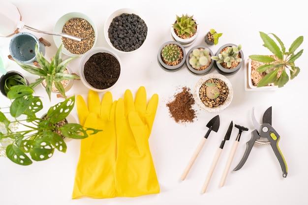 Sprzęt doniczkowy na białym stole, w tym gumowe żółte rękawiczki, kaktus, monstera i inne narzędzia. mała roślina do koncepcji dekoracji. różne rodzaje roślin doniczkowych i narzędzi do sadzenia.