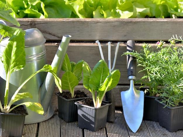 Sprzęt ogrodniczy i rośliny warzywne w drewnianej łatce
