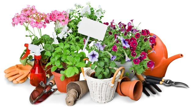 Sprzęt ogrodniczy i rośliny z bliska na drewnianym stole