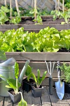 Sprzęt ogrodniczy i uprawa warzyw w ogrodzie warzywnym