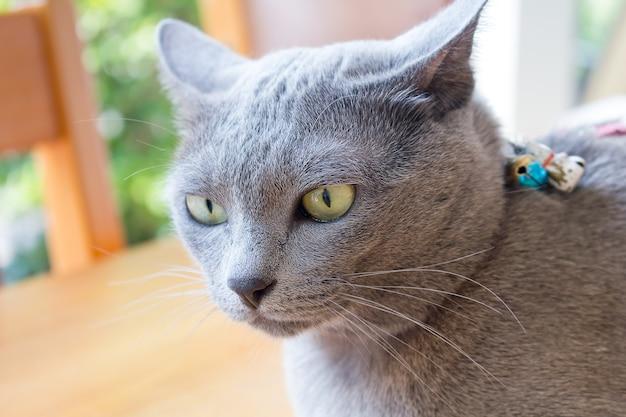 Srebny Błękitny Kot Relaksuje Na Leżance W Plamy Tle, śliczny śmieszny Kota Zakończenie Up, Relaksujący Kot, Kot Bawić Się W Domu. Premium Zdjęcia