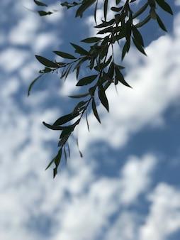 Srebrna gałąź klonu z zielonymi liśćmi pod pięknym pochmurnym niebem