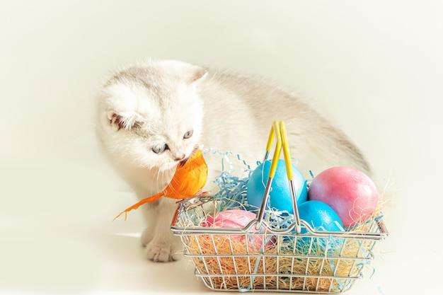 Srebrny kociak brytyjski w pobliżu kosza z kolorowymi jajkami. koncepcja wielkanocna. selektywna ostrość. wysoki klucz.