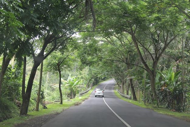 Srebrny rodzinny minivan jeździ asfaltową drogą przez dżunglę w centrum wyspy bali