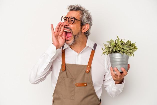 Średni wiek ogrodnik kaukaski mężczyzna trzyma roślinę na białym tle krzycząc i trzymając dłoń w pobliżu otwartych ust.