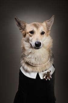 Średniej wielkości pies ubrany w mundurek szkolny, patrząc w kamerę i siedzący