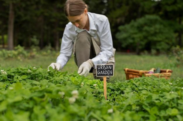 Średnio strzał kobieta sprawdzająca rośliny