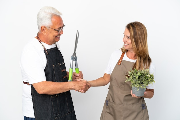 Średniowieczni ogrodnicy trzymający roślinę i nożyczki na białym tle uścisk dłoni po dobrej okazji