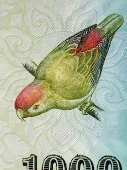 Sri lanka wisząca papuga portret z pieniędzy