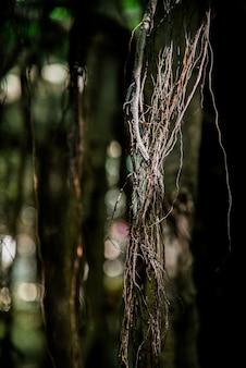 Środka strzału zmroku korzeniowy drzewo w lesie z bokeh tłem