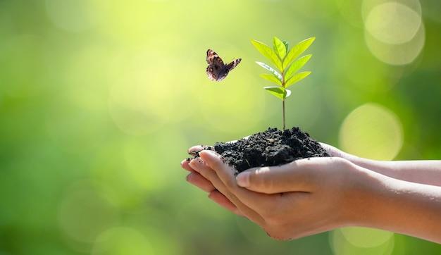 Środowisko dzień ziemi w rękach drzew rosnących sadzonek.