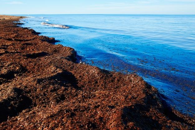 Śródziemnomorska posidonia plaża w alicante denia przy hiszpania