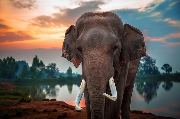 Ssak na zewnątrz słonie dziki słoń kilimandżaro