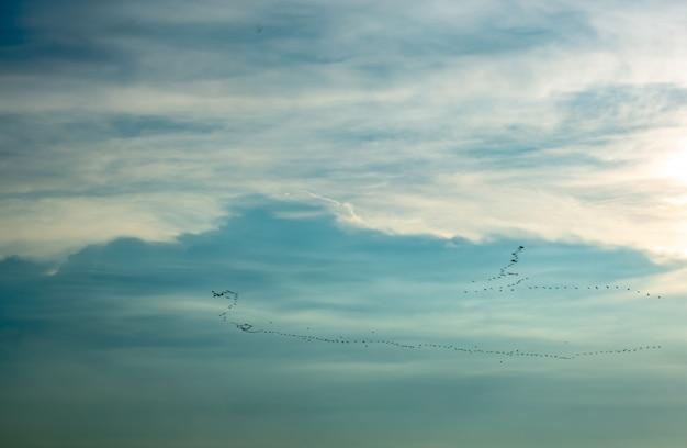 Stada ptaków latających na niebie.