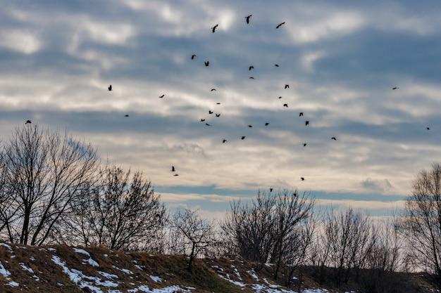 Stado czarnych wron leci na niebie z dramatycznymi chmurami