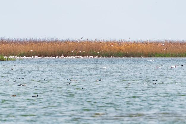 Stado flamingów na jeziorze