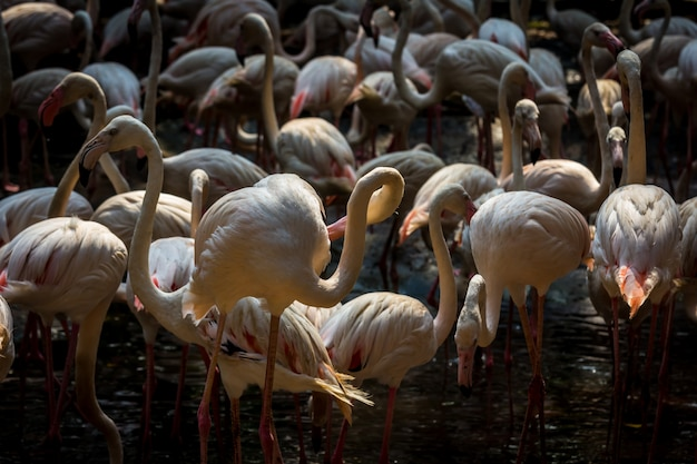 Stado flamingów w zoo