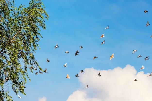 Stado gołębi latających wysoko na niebieskim niebie