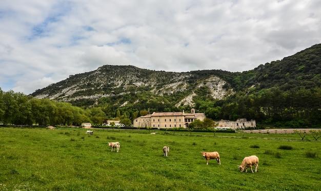 Stado krów wypasanych na pastwisku otoczonym wysokimi górami skalistymi