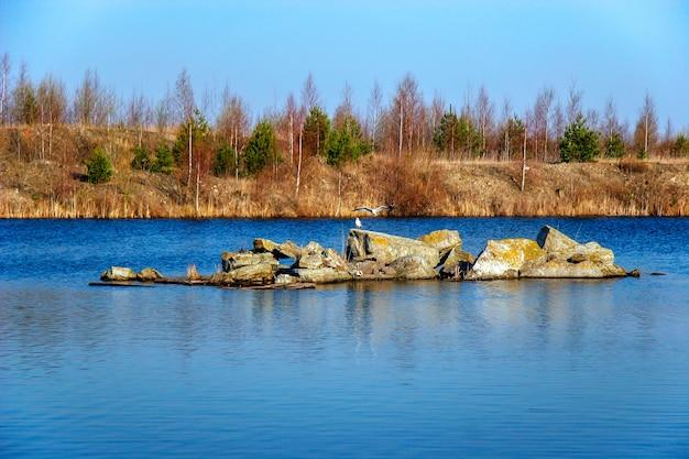 Stado mew na kamieniach na środku jeziora w starym kamieniołomie