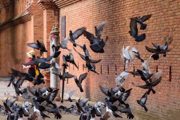 Stado ptaków, które od dawna pamiętamy, latające nad bramą phae w starym mieście w chiang mai, ancien