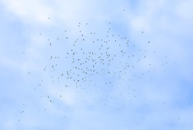 Stado ptaków latających po niebie