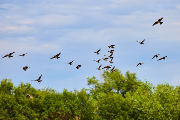 Stado ptaków latających w powietrzu