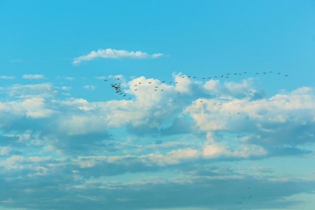 Stado ptaków lecących na południe na błękitnym niebie. ptaki latające na niebieskim niebie.
