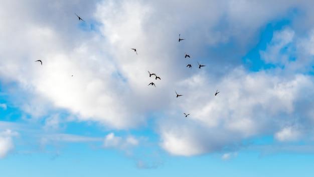 Stado ptaków na niebieskim niebie