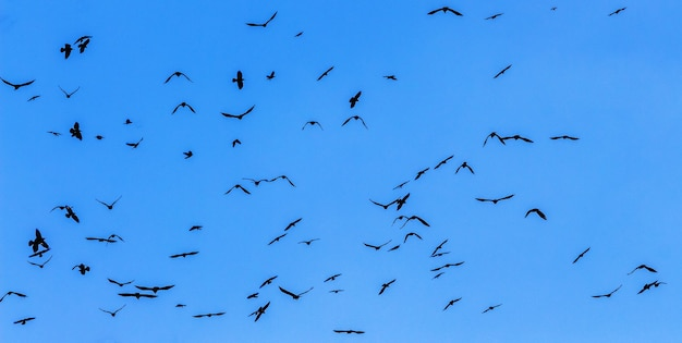 Stado ptaków na tle błękitnego nieba z bliska_