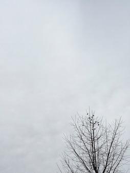 Stado ptaków na wierzchołkach drzew przy zachmurzonym niebie