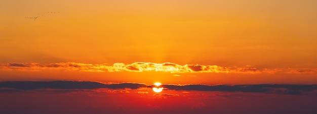Stado ptaków wędrownych latających po niebie o zachodzie słońca