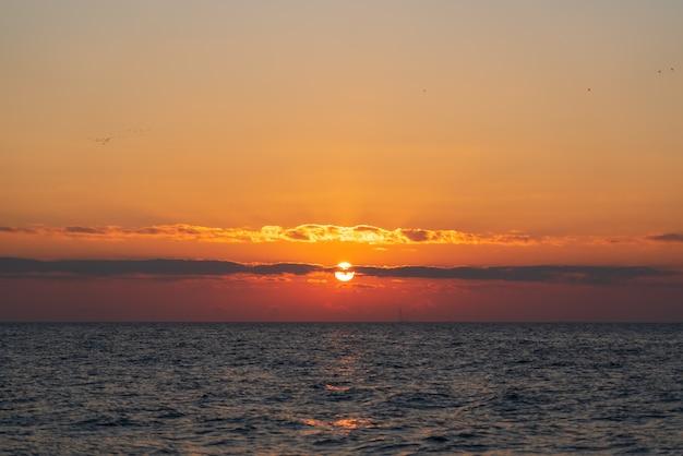 Stado ptaków wędrownych przelatujących nad morzem o zachodzie słońca