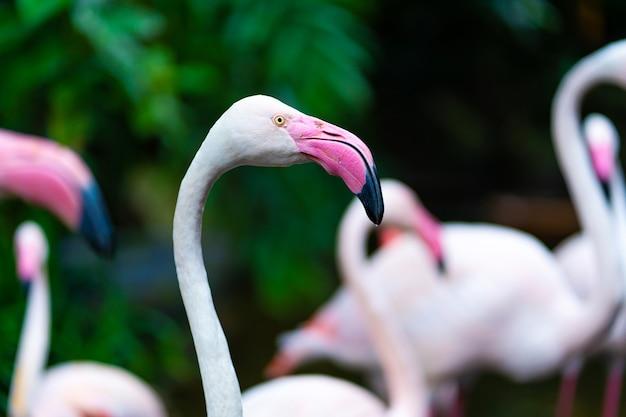 Stado różowych flamingów w stawie zoo.