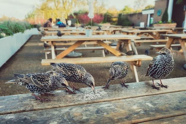 Stado szpaków comon usiadło na stole w kawiarni w london park