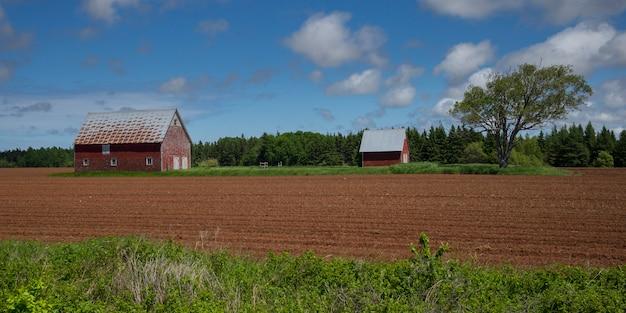 Stajnie na farmie, kensington, wyspa księcia edwarda, kanada