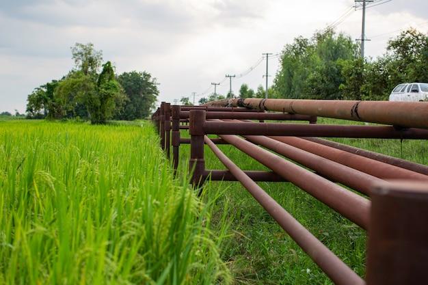 Stalowe długie rury w otwór wiertniczy ropy naftowej w tle pól ryżowych.