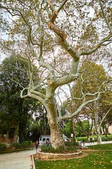 Stambuł, turcja - 11 października 2019: piękny ogród w pałacu topkapi stambuł turcja